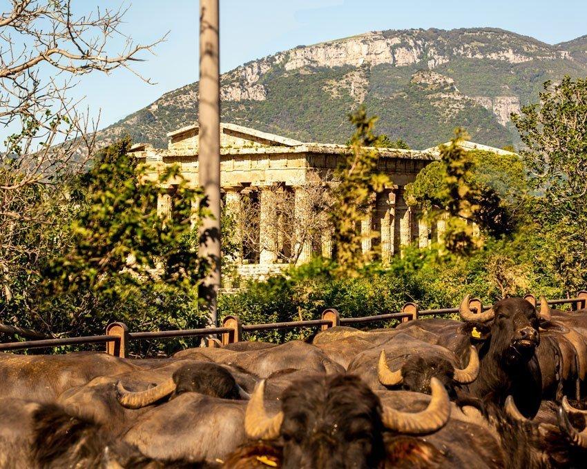 La Perla del Mediterraneo - Tempio di Nettuno